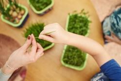 Новинка! Космогрядка для выращивания зелени без земли!
